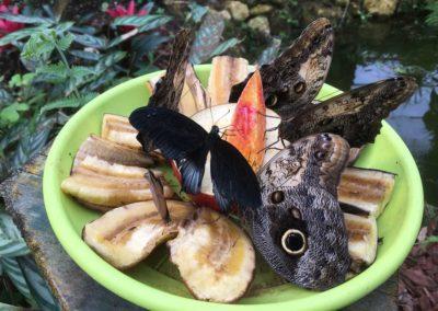 Oasi delle farfalle Santorso Vicenza