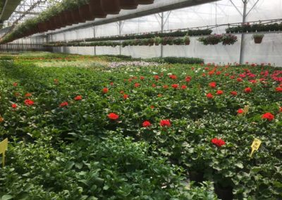 garden Oasi Rossi Santorso