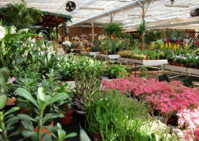 interno de garden Rossi